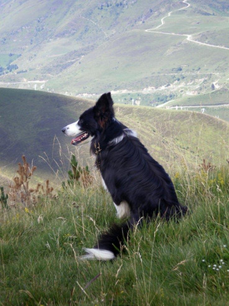 D B Farm Border Collies What Are the Best Kind...