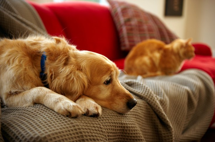 11 dog breeds that get along with cats cuteness. Black Bedroom Furniture Sets. Home Design Ideas