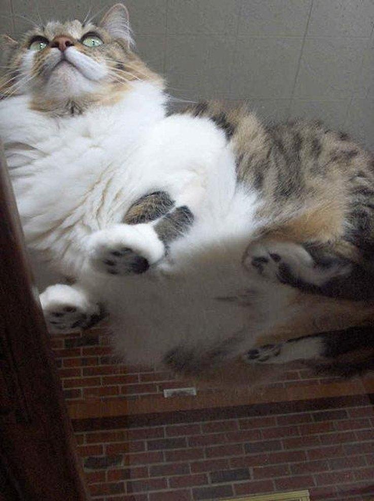 cute cat table
