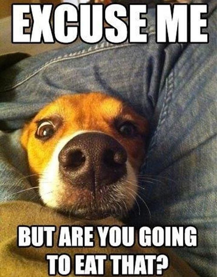 You Got It Animal Meme 15 Animal Memes That O...