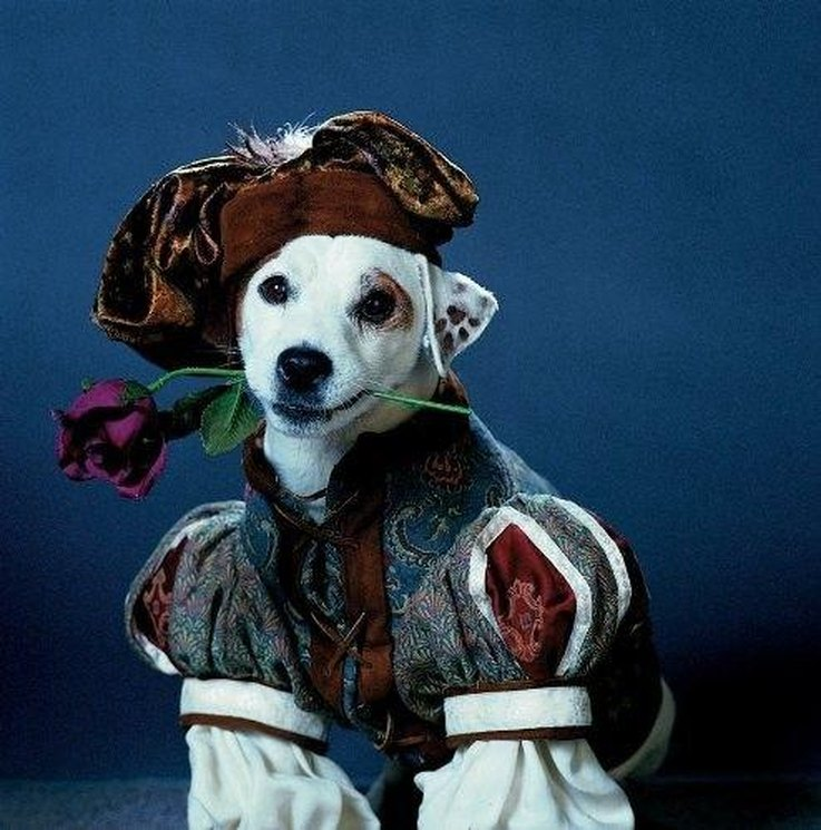 Dogs Like Romeo And Juliet Video