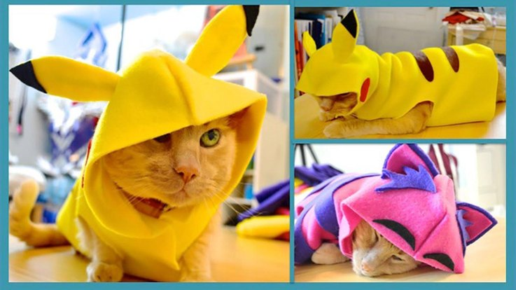 Pikachu Cat . & 20 Super DIY-able Costumes For Cats | Cuteness
