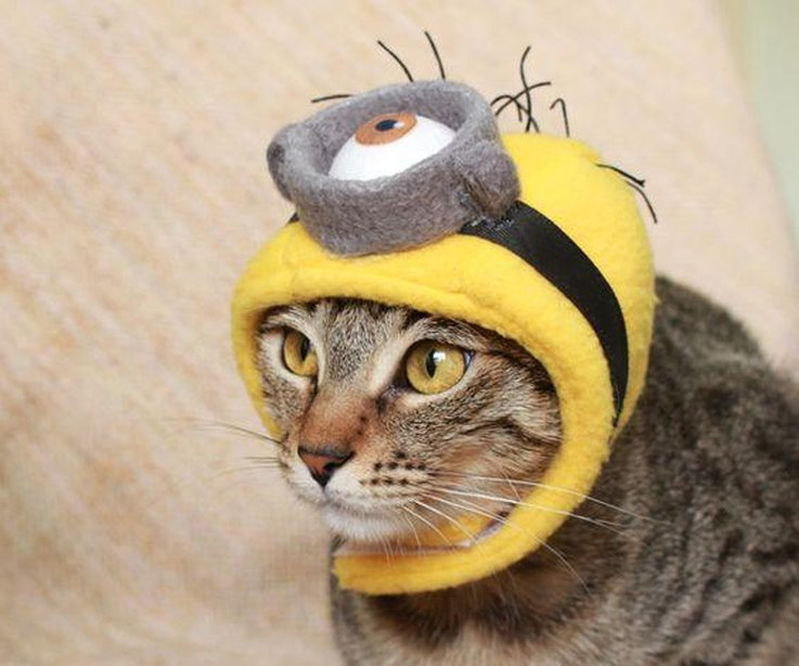 20 super diy able costumes for cats cuteness minion cat solutioingenieria Gallery
