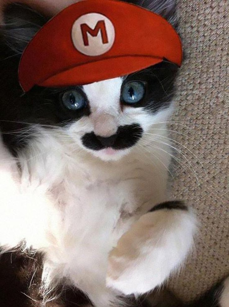 Mario Cat . & 20 Super DIY-able Costumes For Cats | Cuteness