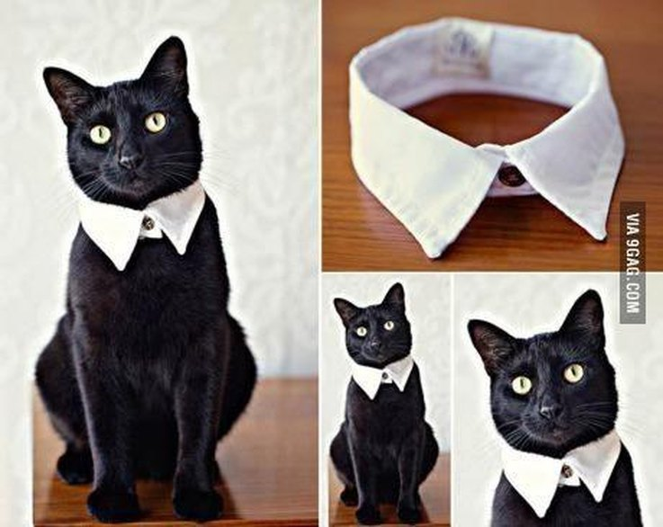 20 Super DIY-able Costumes For Cats | Cuteness