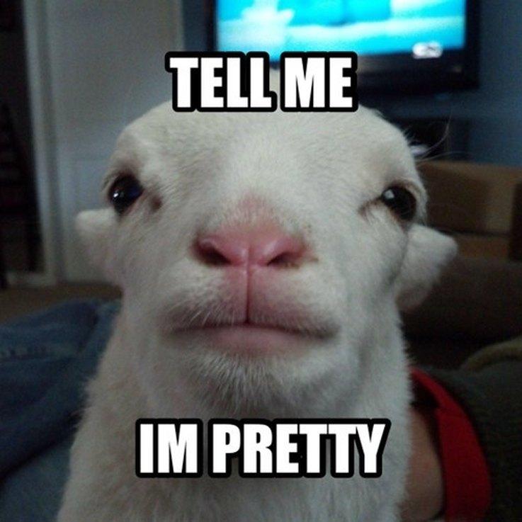 1476735372362animal memes single people 3 animal memes that perfectly describe your sad, single life cuteness