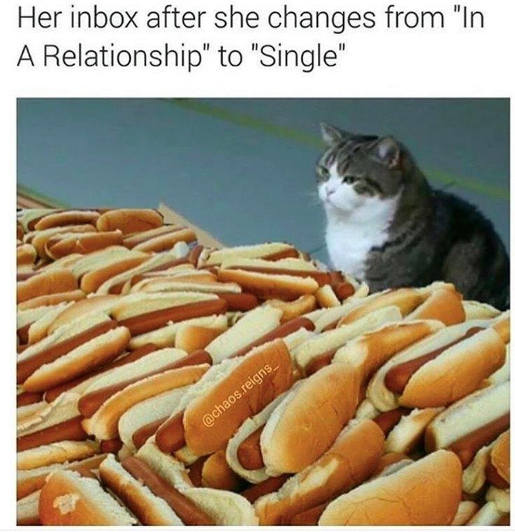 Animal Memes That Perfectly Describe Your Sad, Single Life ...