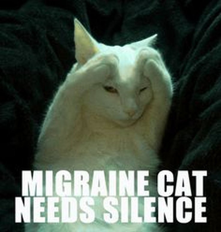 1476823396209migraine cat animal memes that perfectly illustrate pms cuteness,Chronic Illness Cat Meme