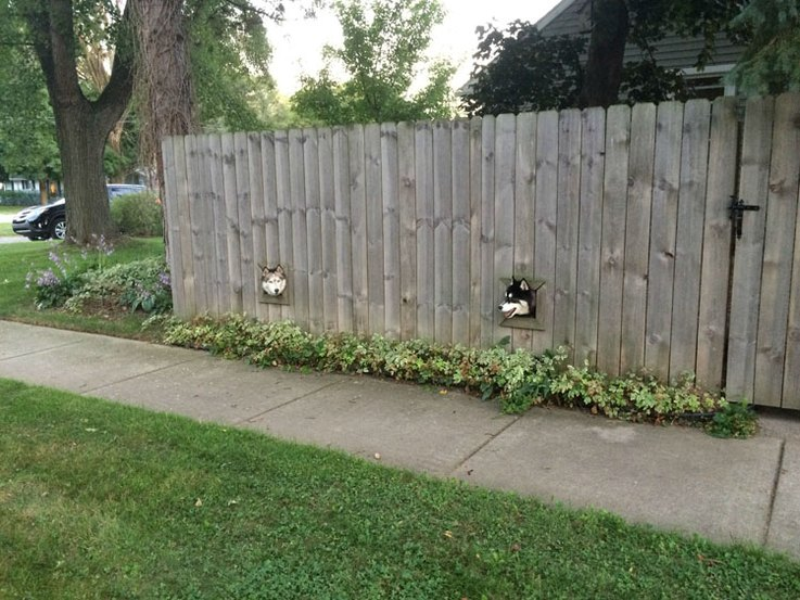 Brilliant Guy Builds Window For His Dogs Amp Their Bff Next