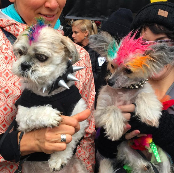 The Dog Parade at Tompkins Square Was Everything