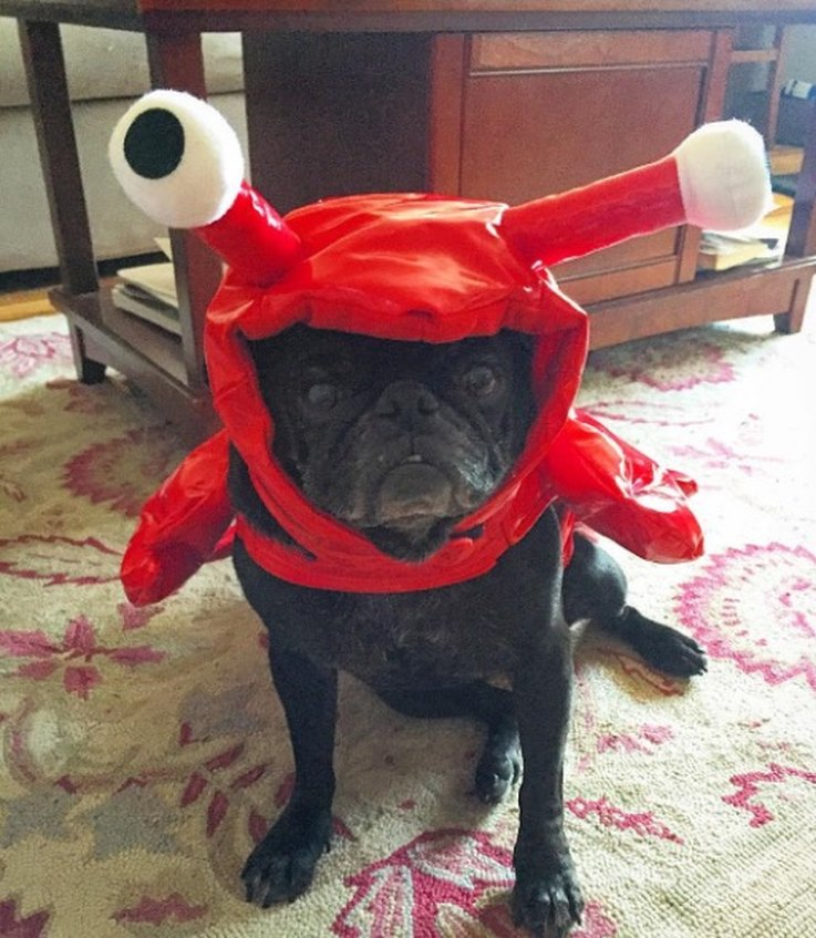 21 Pets-Who-Are-Totally-Your-Halloween-BS