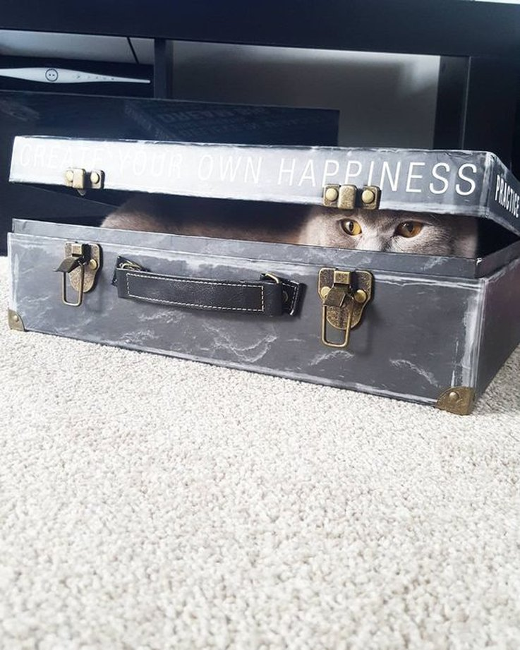 17-cats-that-are-stealthy-af