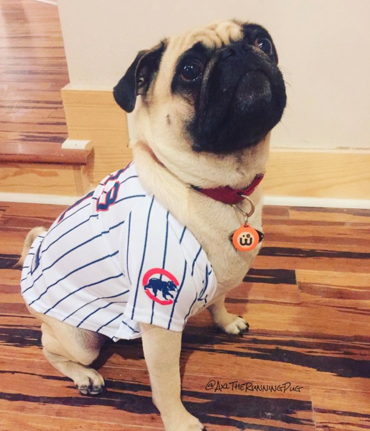 Pugs for Cubs