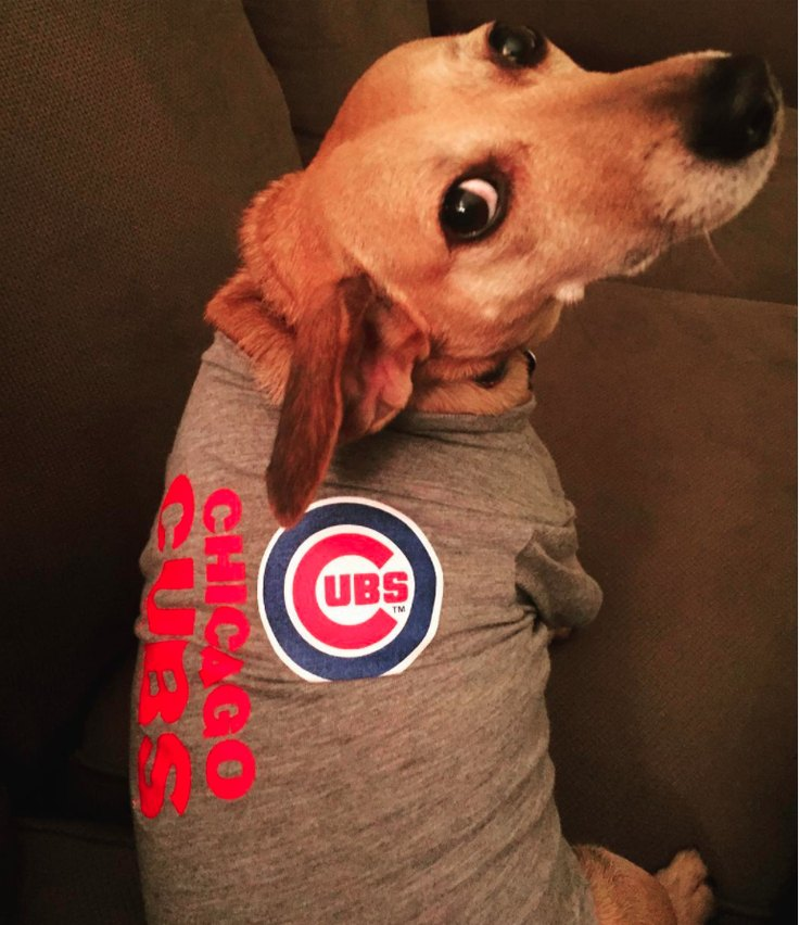 Pups for Cubs on Instagram