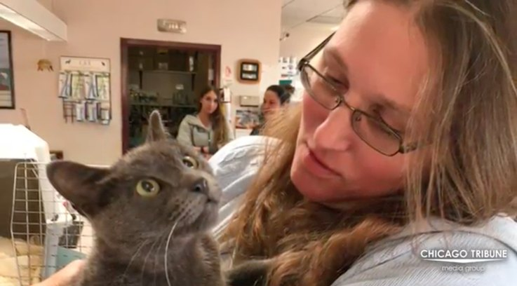 cat-missing-for-3-years-reunited-with-human-mom