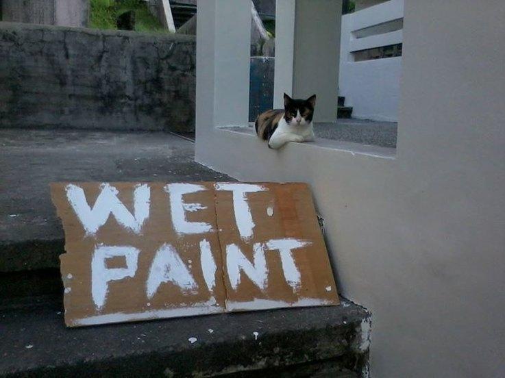 cats-who-dgaf