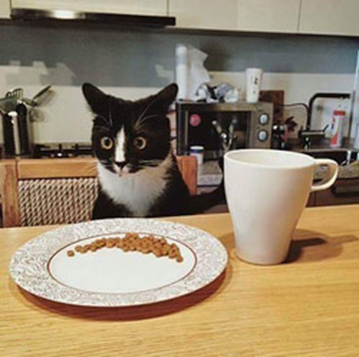 20-animal-reactions-everyone-with-a-horrible-boss-can-relate-to