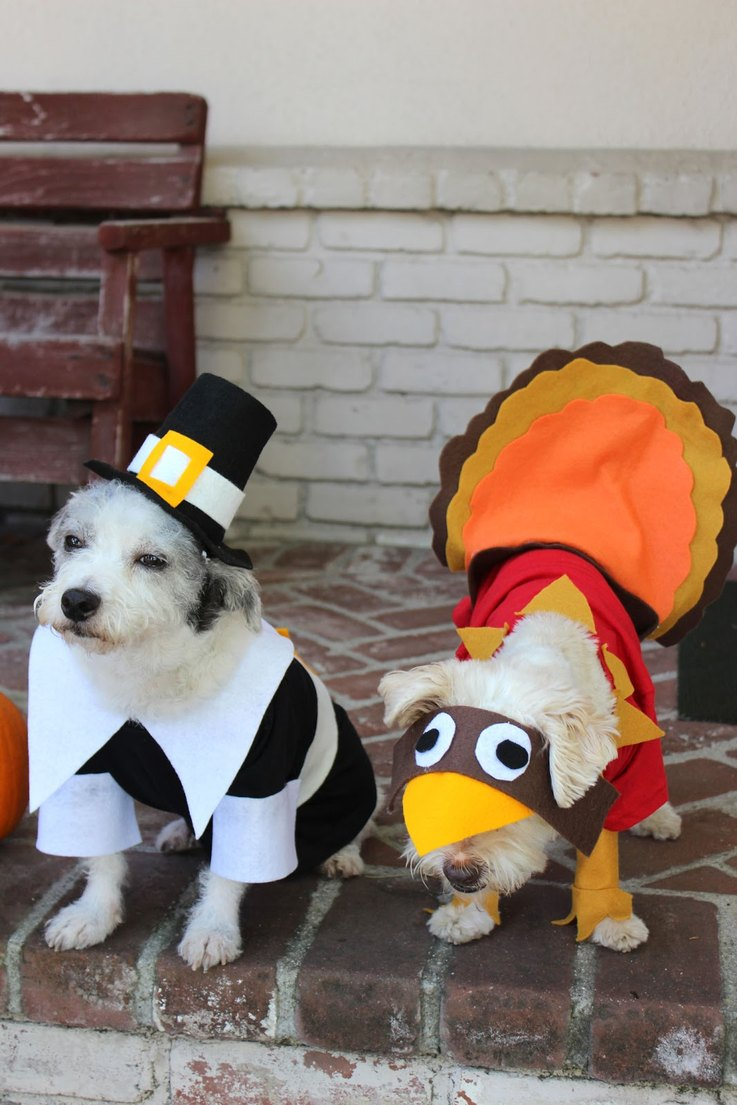 how-to-make-a-pilgrim-costume-for-your-dog