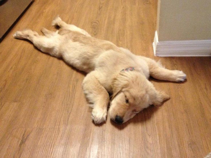 photos-of-sleeping-puppies