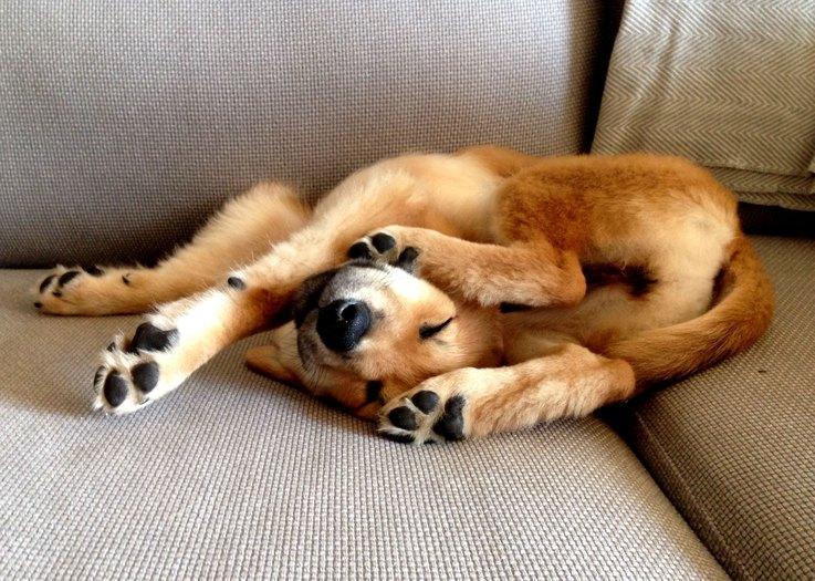https://www.reddit.com/r/photoshopbattles/comments/2ifs1m/psbattle_a_sleeping_puppy_all_folded_up_2814_2007/?st=ivobamjr&sh=67cad232