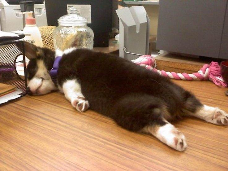 photos of sleeping puppies