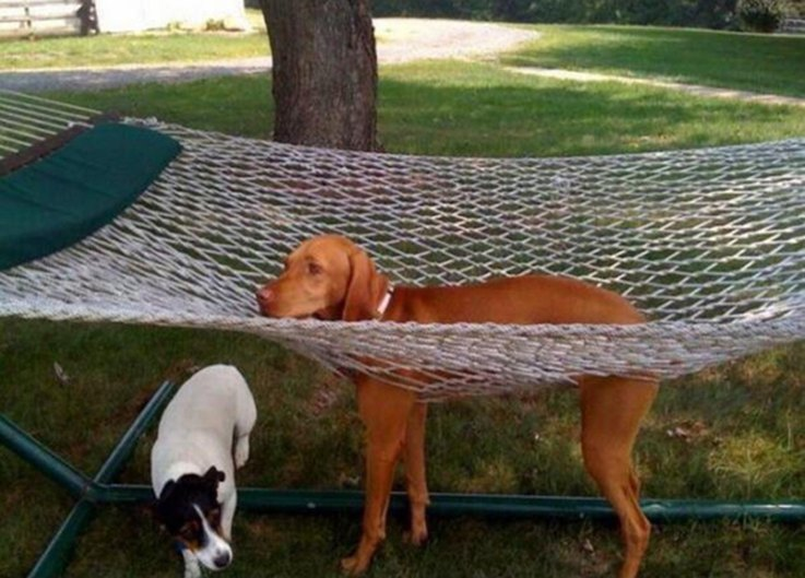 19-dog-who-ruined-their-lives
