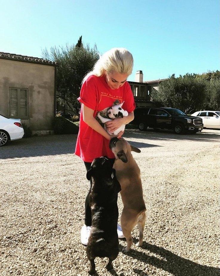 lady gaga's new dog