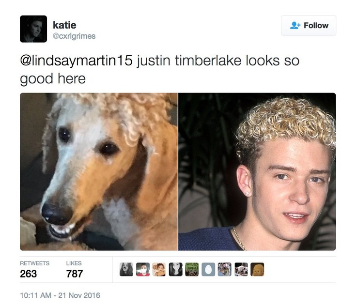 mom-cuts-poodles-hair-to-resemble-90s-justin-timberlake