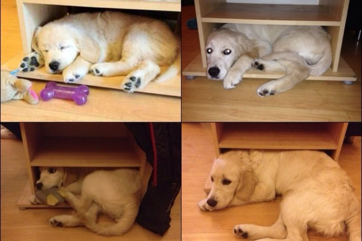 18-dogs-who-grew-up-too-fast