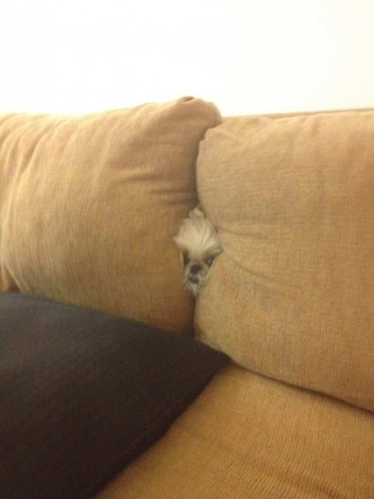16-dogs-spying-on-you-is-the-best-thing-ever
