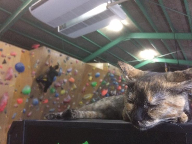 some-cats-are-bold-but-this-one-scaling-a-rock-wall-is-boulder