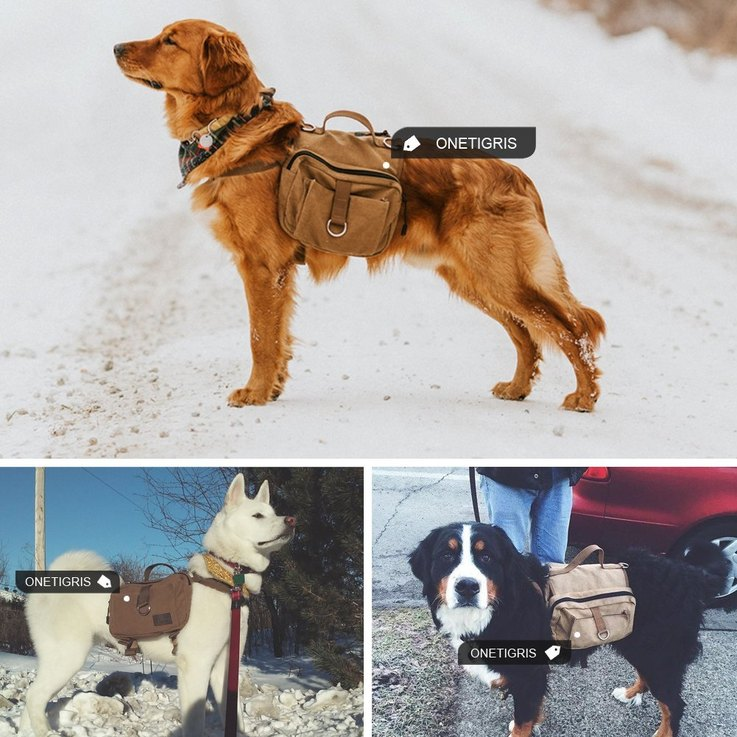 amazon-holiday-gift-guide-for-your-pets