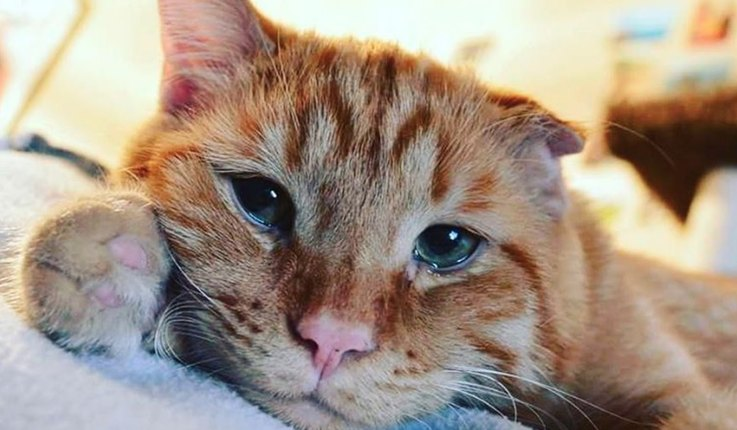 instagrams-saddest-cat-is-raising-money-for-pets-in-need