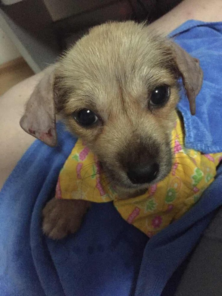 puppy-rescued-from-a-chinese-slaughterhouse