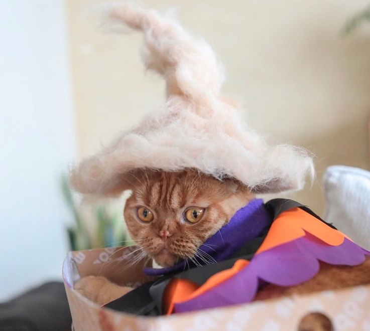 cats-wearing-hats-made-from-their-own-cat-hair