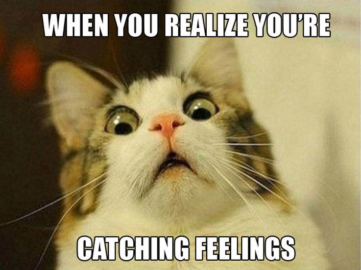 14-pets-trying-so-hard-not-to-catch-feelings