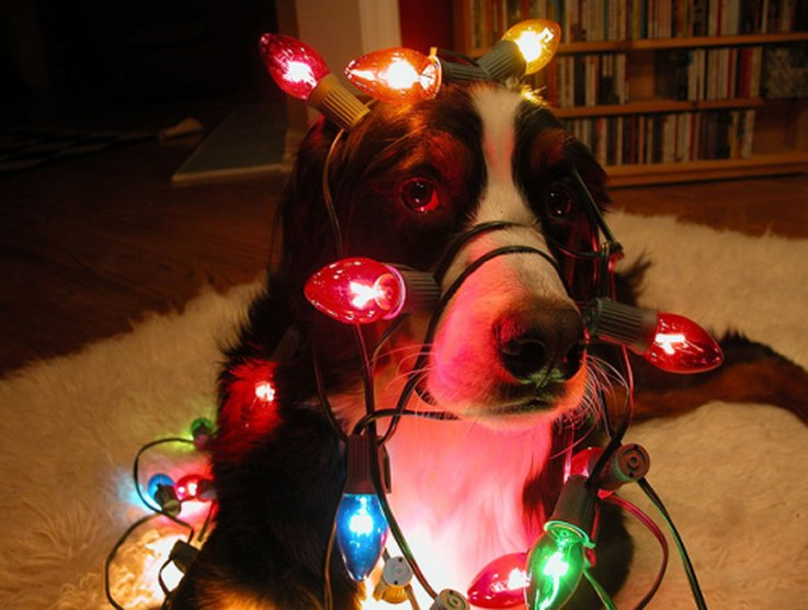 dogs-that-ruined-christmas
