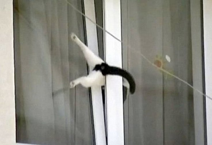 cats-getting-stuck-in-things