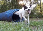 How to Design a Backyard Playground for Dogs