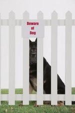 How to Keep My Dog From Getting Out of the Fence