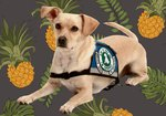 How to Get Certification for Service Dogs