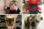 21 Pets Who Are Totally Over Your Halloween BS