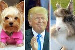 11 Animals Who Rock Trump Hair WAY Better Than Trump