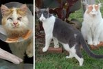 This Brave Blind Cat Adopted a Cat of His Own