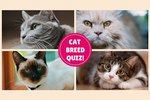 Take Our Cat Breed Challenge!