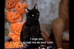 16 Reasons Salem From Sabrina The Teenage Witch Ruled