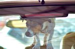 In CA, It's Now Legal To Break Into A Hot Car To Save A Dog