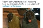 These Hilarious Tweets Capture What Dogs Are Probably Thinking