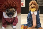 "7 ""Stranger Things"" Animal Costumes That Have Already Won Halloween"